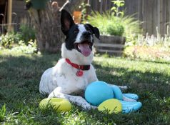 durable_dog_toys