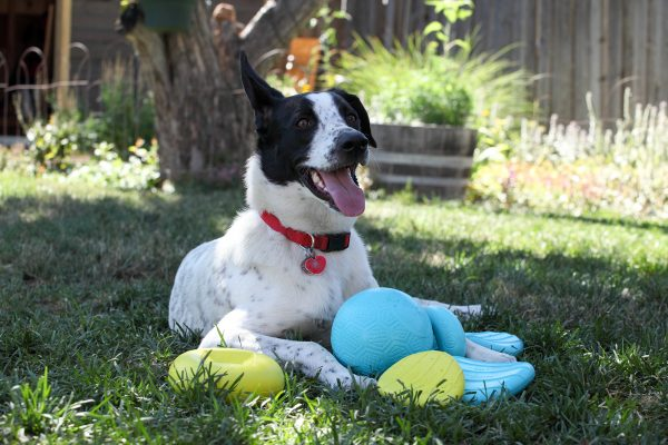 happy dog with durable dog toy