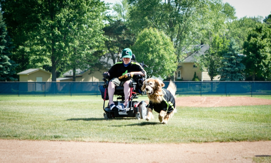 How To Train A Service Dog For Mobility
