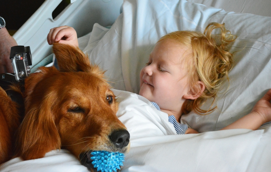 pet therapy | benefits of animal-assisted therapy